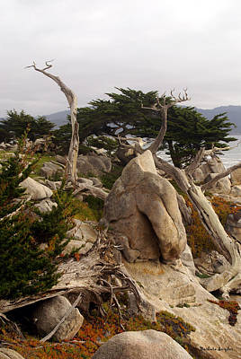 By The Sea Digital Art - Ghost Tree Site 17 Mile Drive by Barbara Snyder