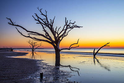 Photograph - Ghost Trees Of Boneyard Beach 02 by Jim Dollar