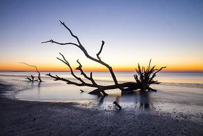 Photograph - Ghost Trees Of Boneyard Beach 06 by Jim Dollar