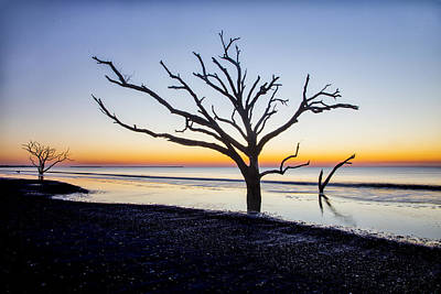 Photograph - Ghost Trees Of Boneyard Beach 08 by Jim Dollar