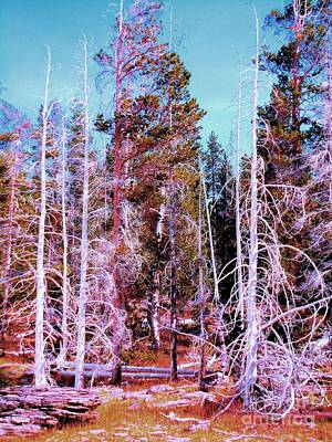 Ghost Trees Of The Yellowstone Art Print by Ann Johndro-Collins