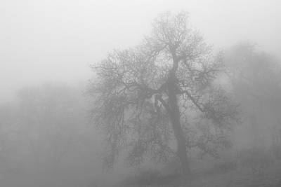 Photograph - Ghostly Oak In Fog  Central California Black And White Monochrome by Ram Vasudev