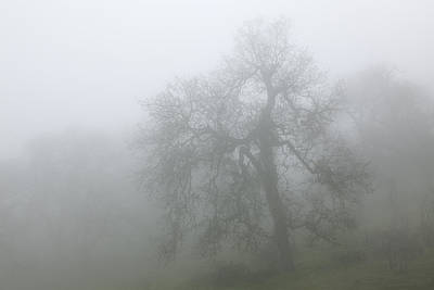 Ghostly Oak In Fog - Central California Art Print by Ram Vasudev