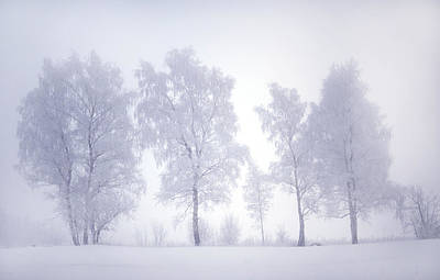 Photograph - Ghostly Trees In Winter Mist by Jenny Rainbow