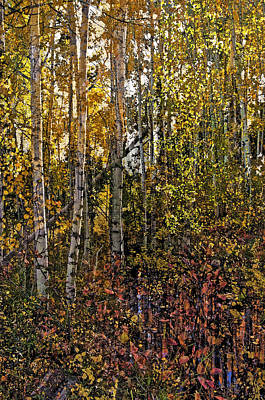Photograph - Ghosts Of A Quaking Aspen by Eric Rundle