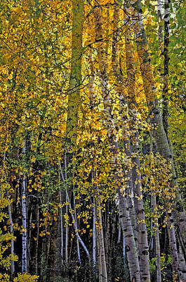 Photograph - Ghosts Of A Quaking Aspen Two by Eric Rundle
