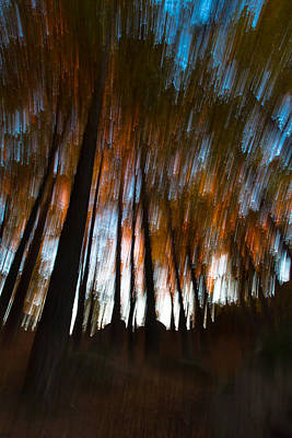 Photograph - Ghosts Of The Forest by Edgar Laureano