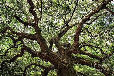 Photograph - Giant Angel Oak by Adam Jewell