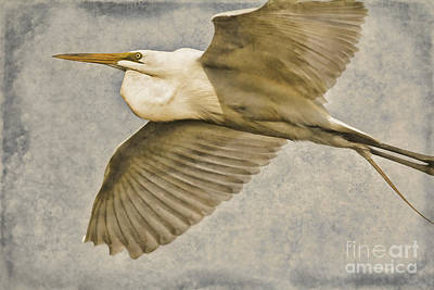 Giant Beauty In Flight Art Print by Deborah Benoit