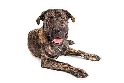 Herding Dog Photograph - Giant Breed Puppy Dog by Susan Schmitz