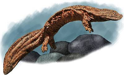Photograph - Giant Chinese Salamander by Roger Hall