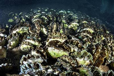 Giant Clam Farm Print by Ethan Daniels