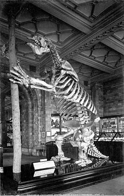 Ground Sloth Photograph - Giant Ground Sloth by Natural History Museum, London