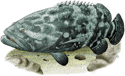 Photograph - Giant Grouper by Roger Hall