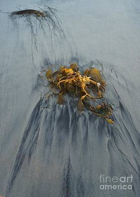 Photograph - Giant Kelp On The Beach by Kerri Mortenson