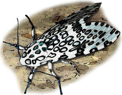 Photograph - Giant Leopard Moth by Roger Hall