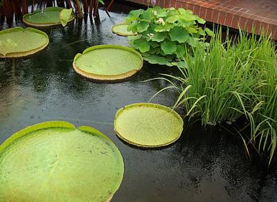 Garden Photograph - Giant Lily Pads by Sue Midlock