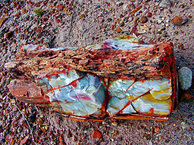 Giant Log In Rainbow Forest In Petrified Forest National Park-arizona  Original