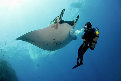 Giant Manta Ray With A Scuba Diver Art Print by Gerard Soury