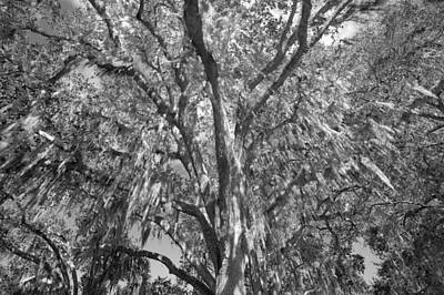 Photograph - Giant Oak And Spanish Moss by Rich Franco