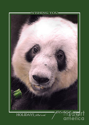 Photograph - Giant Panda Bear Wildlife Christmas Cards by Jai Johnson