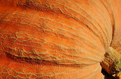 Giant Pumpkin Art Print by Luke Moore