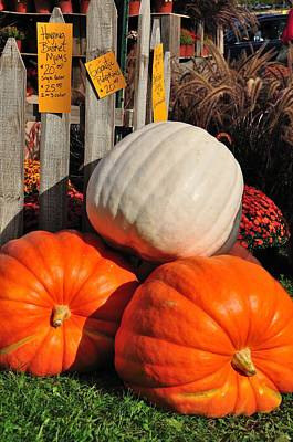 Photograph - Giant Pumpkins by Gene Sherrill