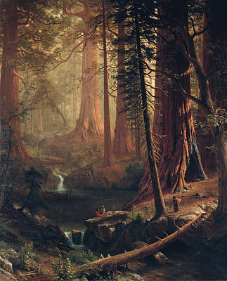 Giant Redwood Trees Of California Print by Albert Bierstadt