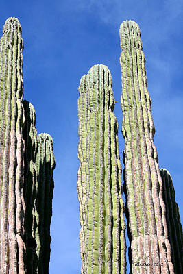 Photograph - Giant Saguaro by Dick Botkin