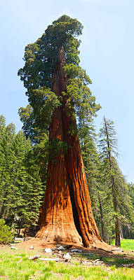 Photograph - Standing Tall - Giant Sequoia Redwood Tree Sequoia National Park California by Ram Vasudev