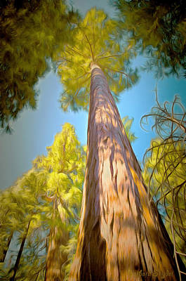Tree Roots Painting - Giant Sequoia Tree by Barbara Snyder