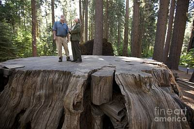 Sequoiadendron Giganteum Photograph - Giant Sequoia Tree Stump by Quincy Russell, Mona Lisa Production