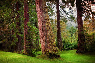Giant Sequoias. Benmore Botanical Garden. Scotland Art Print by Jenny Rainbow