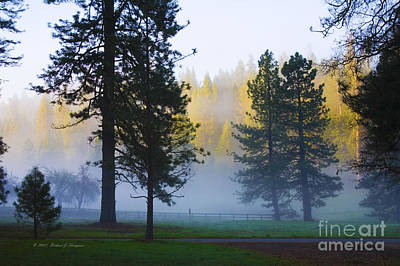 Photograph - Giant Sequoias by Richard J Thompson