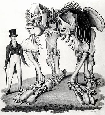 Giant Sloth Skeleton Art Print by Universal History Archive/uig