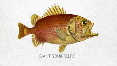 Saltwater Fishing Drawing - Giant Squirrelfish by Aged Pixel
