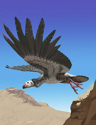 Condor Wall Art - Photograph - Giant Teratorn by Jaime Chirinos/science Photo Library