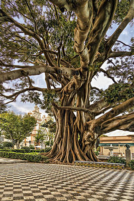 Photograph - Giant Tree by Maria Coulson