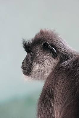 Print featuring the photograph Gibbon Monkey Profile Portrait by Tracie Kaska