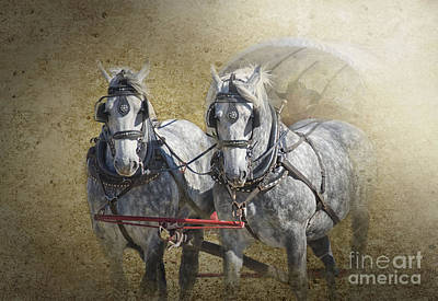 Photograph - Giddyup by Betty LaRue