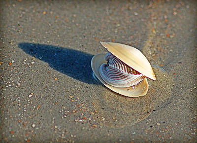 Photograph - Gift From The Sea by Linda Brown