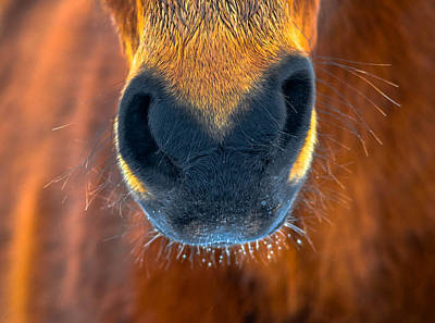 Forelock Photograph - Gift Horse by Brian Stevens