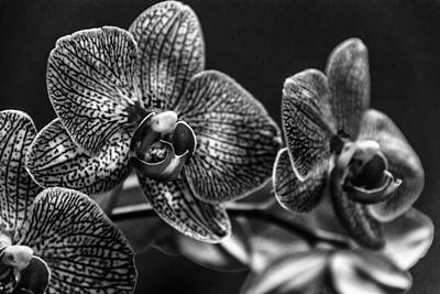 Black Orchids Photograph - Gift Of Flowers by Marvin Spates