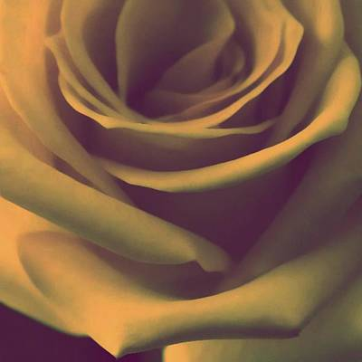 Roses Photograph - Gift Of Gold by The Art Of Marilyn Ridoutt-Greene