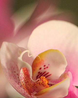 Delicately Photograph - Gift Of Life by The Art Of Marilyn Ridoutt-Greene