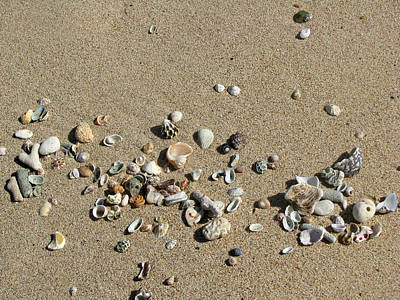 Photograph - Gifts From The Ocean 01 by Pamela Critchlow