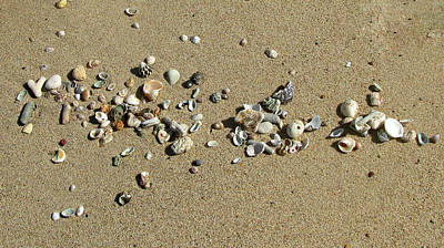Photograph - Gifts From The Ocean 02 by Pamela Critchlow