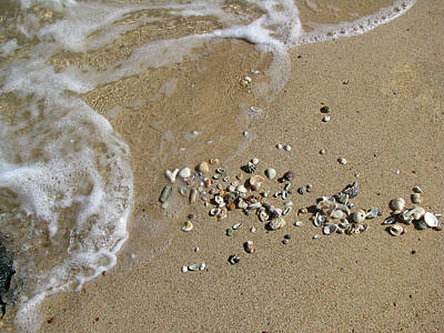 Photograph - Gifts From The Ocean 03 by Pamela Critchlow