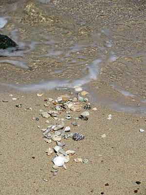 Photograph - Gifts From The Ocean 05 by Pamela Critchlow