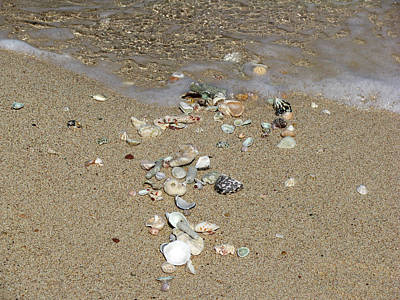 Photograph - Gifts From The Ocean 07 by Pamela Critchlow